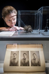 The Institute of Sexology, Wellcome Collection